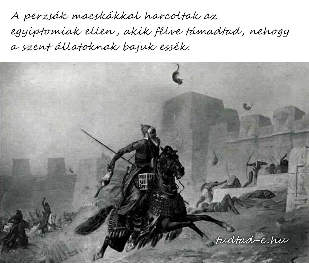 perzsa_macska